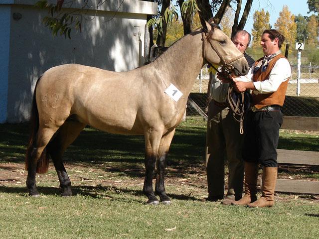 Caba a el chusco caba a las boleadoras caballos criollos for La cabana divertida