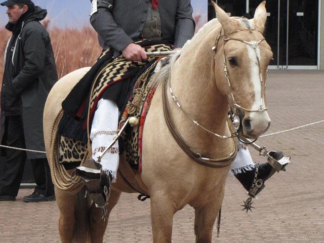 Fotos de caballos criollos en argentina 24